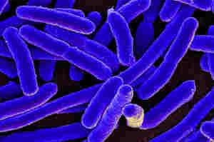 Antibioticoresistenza e germi sentinella