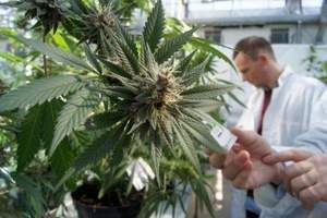 Cannabis e approcci terapeutici: corso formativo sulle novità...